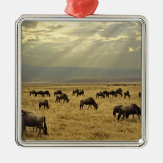 Sunbeams and Wildebeest, Connochaetes taurinus Silver-Colored Square Ornament
