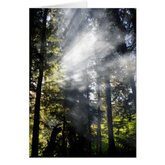 Sunbeams Card