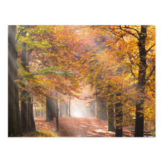 Sunbeams in an autumn forest postcard