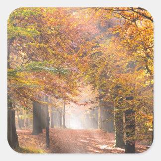 Sunbeams in an autumn forest sticker
