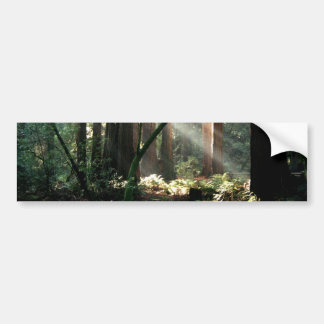 Sunbeams in the woods bumper stickers