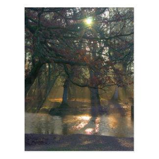 Sunbeams on misty river postcard