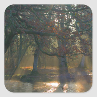 Sunbeams on misty river square sticker