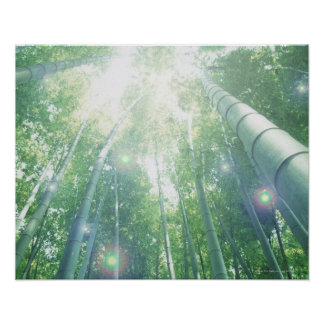 Sunbeams shining through bamboos poster