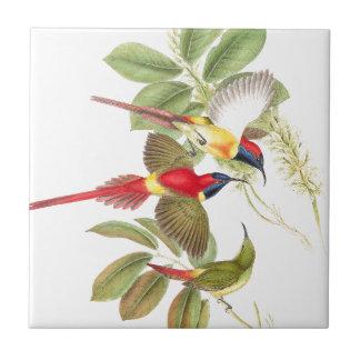 Sunbird Birds Wildlife Animals Botanical Tile