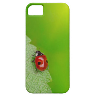 Sunburst above tiny ladybird climbing up a fresh iPhone 5 case