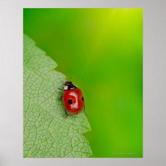 Sunburst above tiny ladybird climbing up a fresh poster