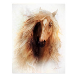 Sundance Mustang Portrait Postcard