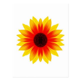 Sunflower.009 Postcard