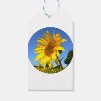 Sunflower 01.1rd, Field of Sunflowers Gift Tags