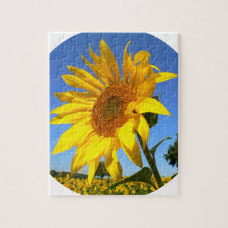 Sunflower 01.1rd, Field of Sunflowers Jigsaw Puzzle