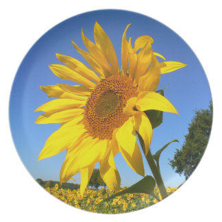 Sunflower 01.1rd, Field of Sunflowers Party Plates