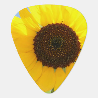 sunflower-11 guitar pick