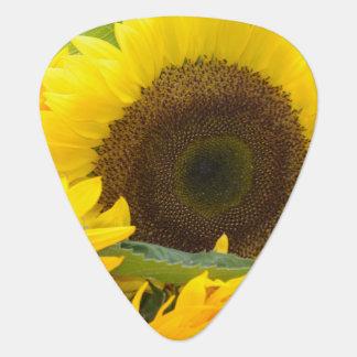 sunflower-132.jpg pick