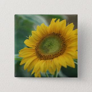 Sunflower 2 Inch Square Button