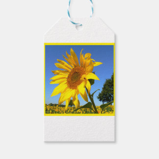 Sunflower 3.0, Field Of Sunflowers Pack Of Gift Tags