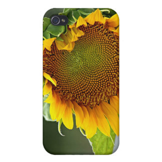 Sunflower 4 cover for iPhone 4