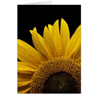 Sunflower after the rain card
