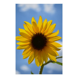 Sunflower and Blue Sky poster