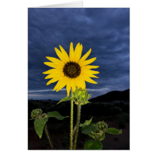 Sunflower and Dark Blue Sky Card