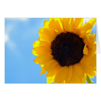 Sunflower and Sky Card