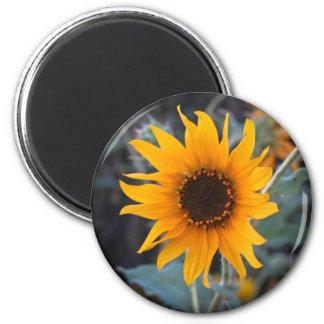 Sunflower at Dusk Magnet