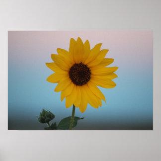 Sunflower at Sunrise Poster