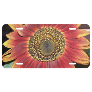 Sunflower Blossom License Plate