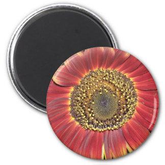 Sunflower Blossom Magnet Refrigerator Magnet