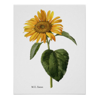 Sunflower Botanical Poster
