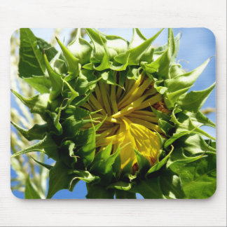 Sunflower Bud Mouse Pad