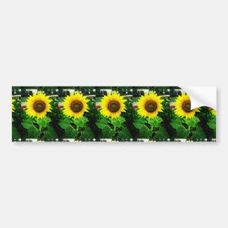 Sunflower Bumper Sticker