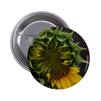 Sunflower Button