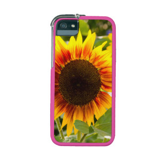 Sunflower iPhone 5/5S Cover