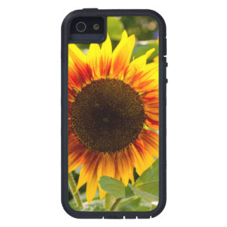 Sunflower Case For iPhone 5