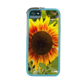 Sunflower Case For iPhone 5/5S