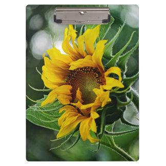 Sunflower Clipboards