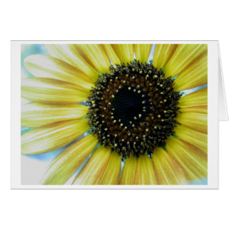 Sunflower Close Up Note Card