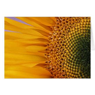 Sunflower Closeup Greeting Card (Blank Inside)