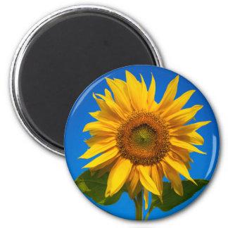 Sunflower closeup magnets