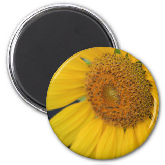 Sunflower Closeup magnet