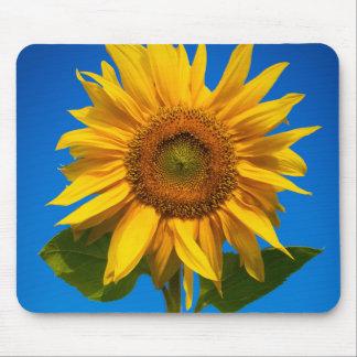 Sunflower closeup mousepads