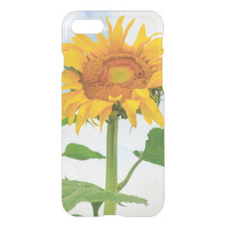 Sunflower, community garden, Moses Lake, WA, USA iPhone 7 Case