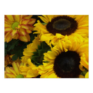 Sunflower Fall Flowers Posters