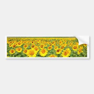 Sunflower field bumper sticker