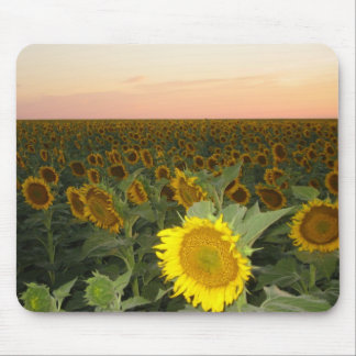 Sunflower Field Mouse Pads