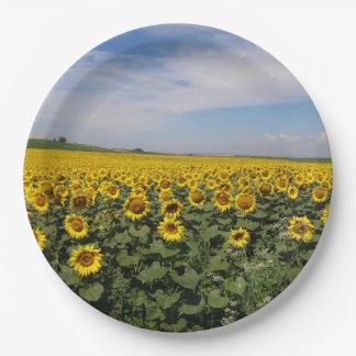 Sunflower Field Paper Plates