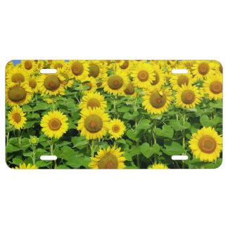 Sunflower Fields License Plate