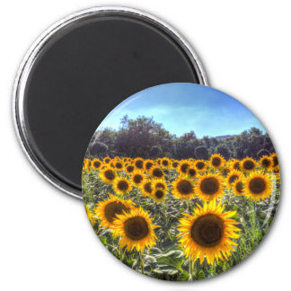 Sunflower Fields Of Dreams Magnet