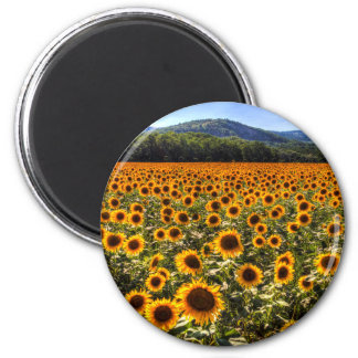 Sunflower Fields Of Summer Magnet